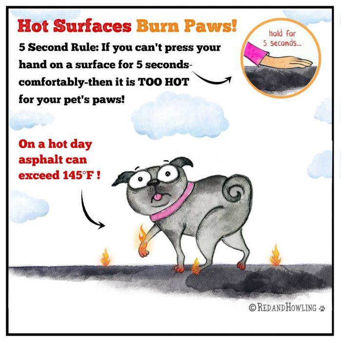 Forró talaj megégeti a kutyák tappancsat!