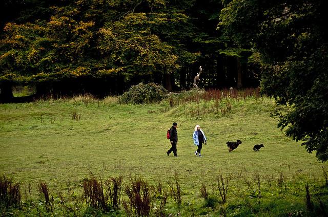 két ember két kutyával egy réten, póráz nélkül