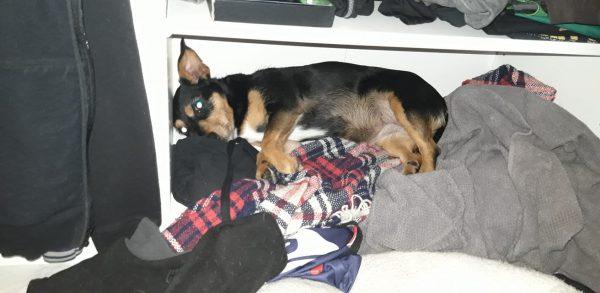 a kutya elbújt egy szekrényben