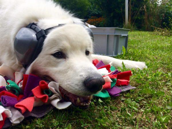 kutya fülvédők