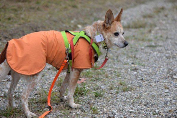 kutya nyomkövetővel