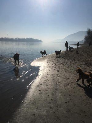 sok kutya a duna parton