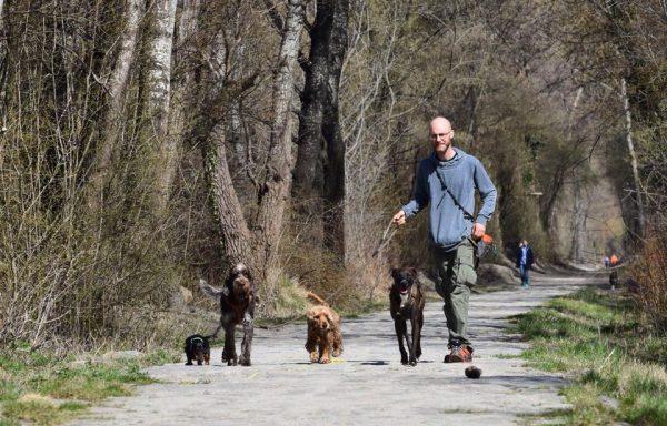 Négy kutya sétál egymás mellett, az egyik pórázon van.