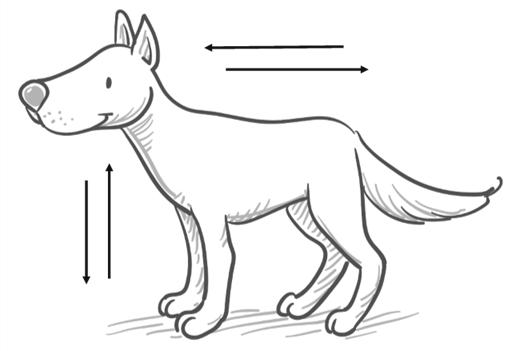 A semleges testtartás: a kutya nem próbál nagyobbnak vagy kisebbnek tűnni, a súlypontja középen van. Figyeld meg a kutyádat, mely helyzetekben viselkedik így!