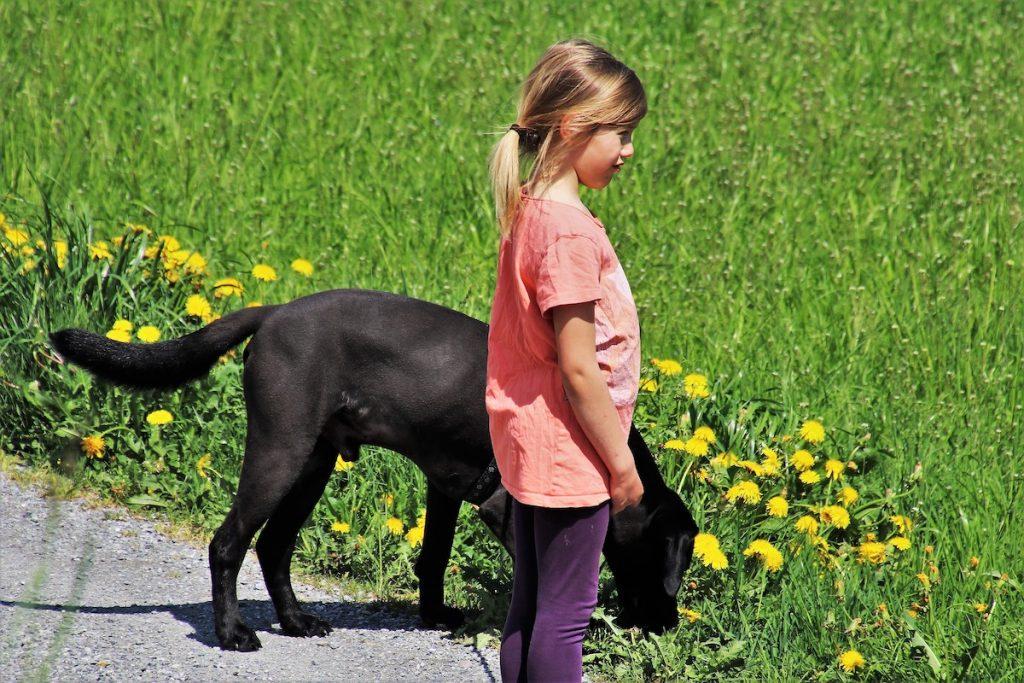 kutya és gyerek felfedezi a környezetét