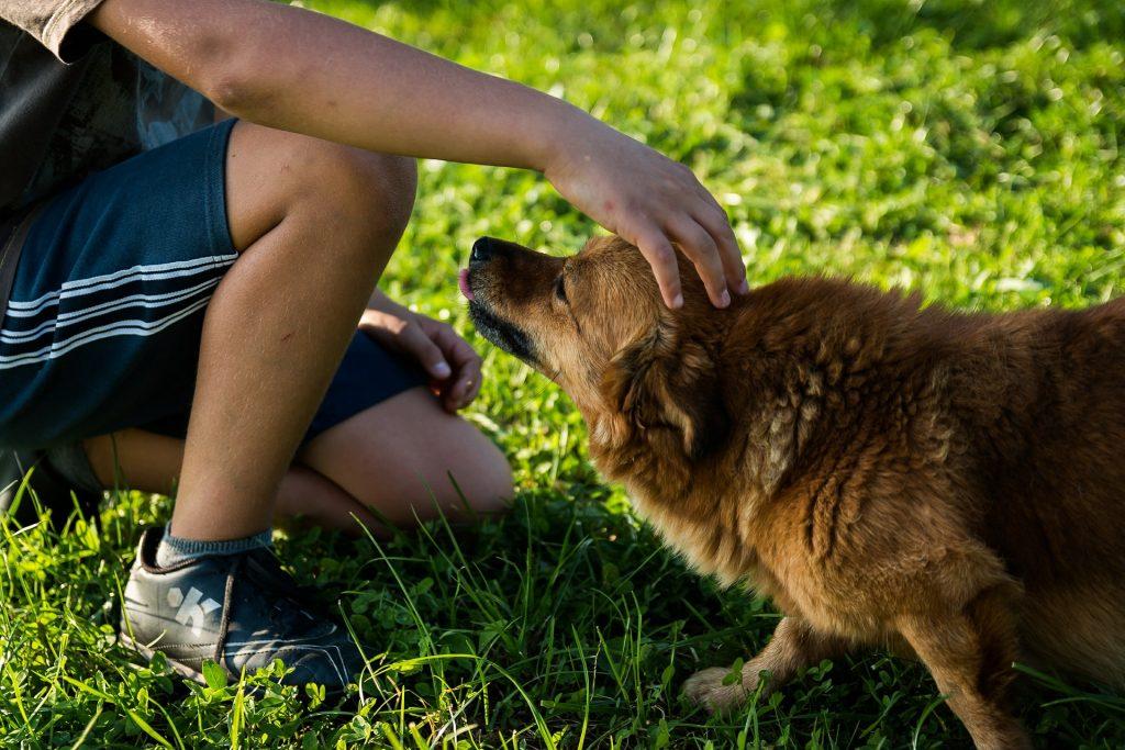 Kép egy kutyáról és egy gyerekről: a kutya kiölti a nyelvét, visszahúzza a fülét, a súlypontja hátul lent van - ez a kutya nem boldog!