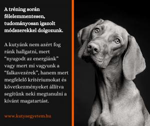 """A kutyánk nem azért fog ránk hallgatni, mert """"nyugodt az energiánk"""" vagy mert mi vagyunk a """"falkavezérek"""", hanem mert megfelelő kritériumokat és következményeket állítva segítünk neki megtanulni a kívánt magatartást."""